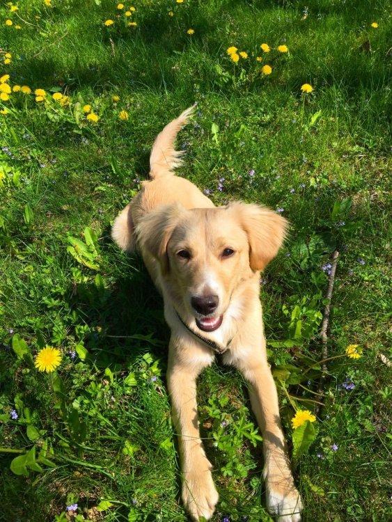 Céline foster pup grass.jpg