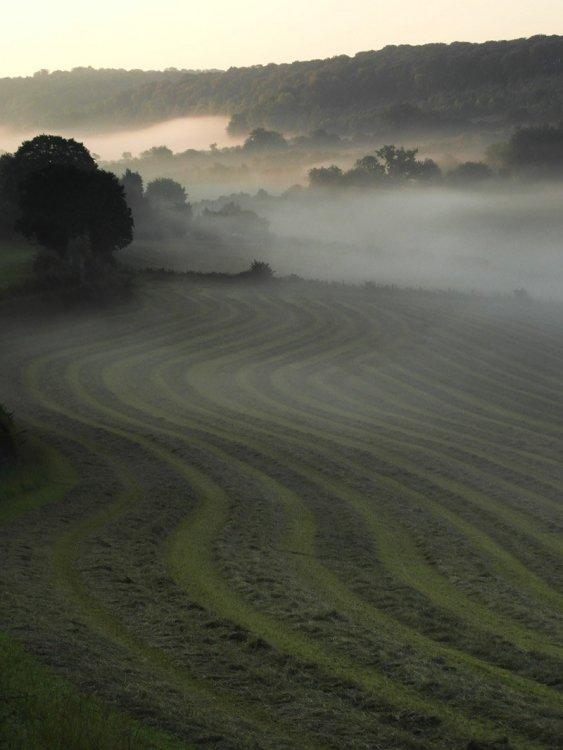 2015.10.05 single track mist (1).jpg
